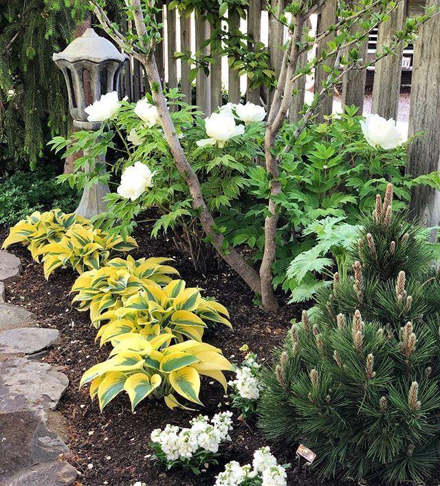 Garden Answer Gardenanswer Instagram Photos And Videos