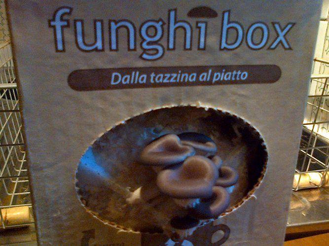 Funghi Ostrica Funghibox. Giorno 5. #funghi #faidate #coltivare #kit #pleurotus #orto