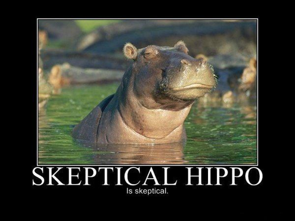 Skeptical hippoLaugh, Funny Pictures, Funnypictures, Skepticalhippo, Skeptical Hippo, Funny Stuff, Hip Hop, Motivation Posters, Animal