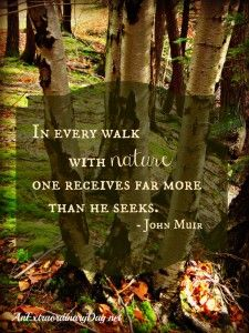 AnExtrarodinaryDay.net - Birches in the woods - John Muir quote about Nature