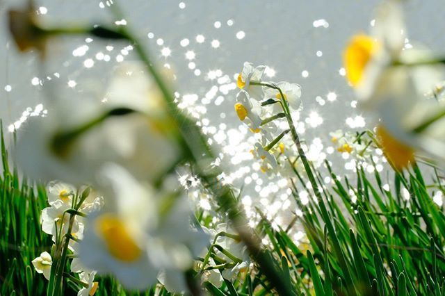 Photo by Yuki Imaura   X-H1   XF90mmF2 R LM WR   F16   1/220sec   ISO800 #xphotographer #springtime