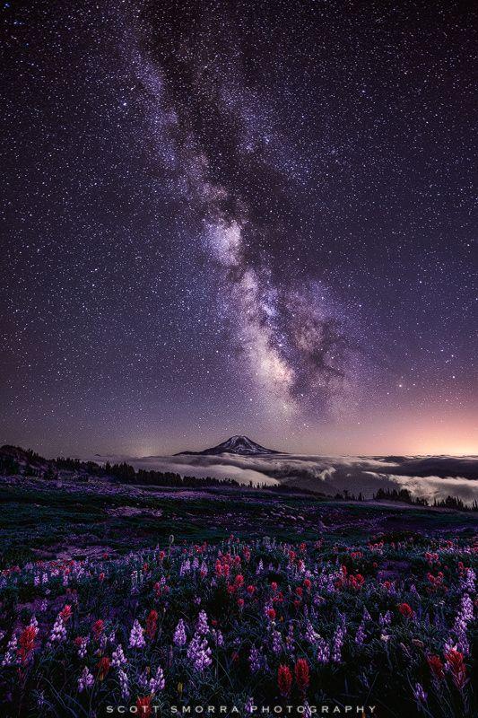 Celestial Existence   Milky Way, Lupine and Indian Paintbrush, Goat Rocks Wilderness, Mount Rainier National Park, Washington   by Scott Smorra