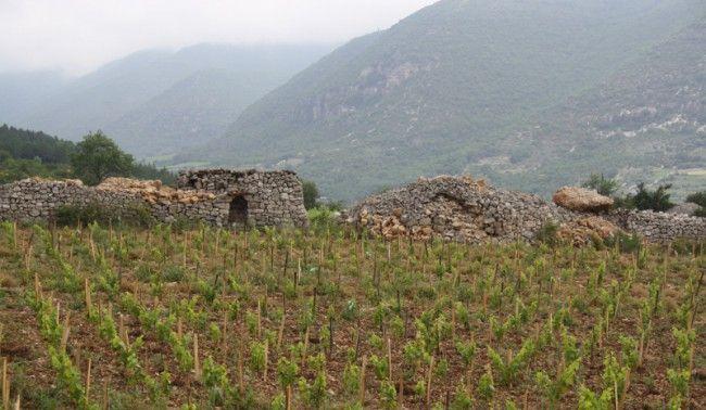 Dégustation prestige des vins du Languedoc IN VINO VERITAS