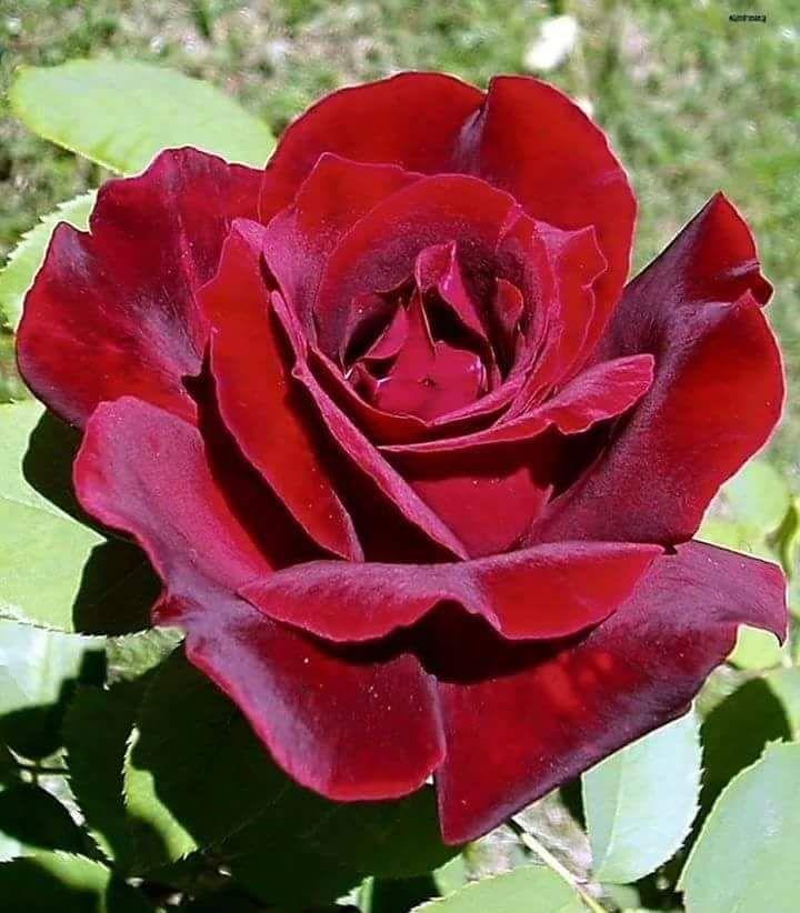 Con esta imagen se pueden trabajar nociones de respeto, en este caso, a las flores.