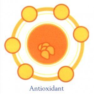 ♥HWI HERBAL SOLUTION♥: Manfaat Antioksidan Bagi Tubuh dan Kesehatan