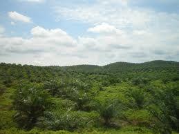 al clima en Colombia es tropical