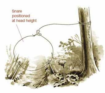 5 Snares and Traps