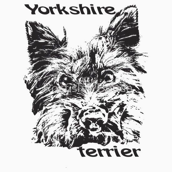 Yorkshire Terrier  Cute dog  lovely pet