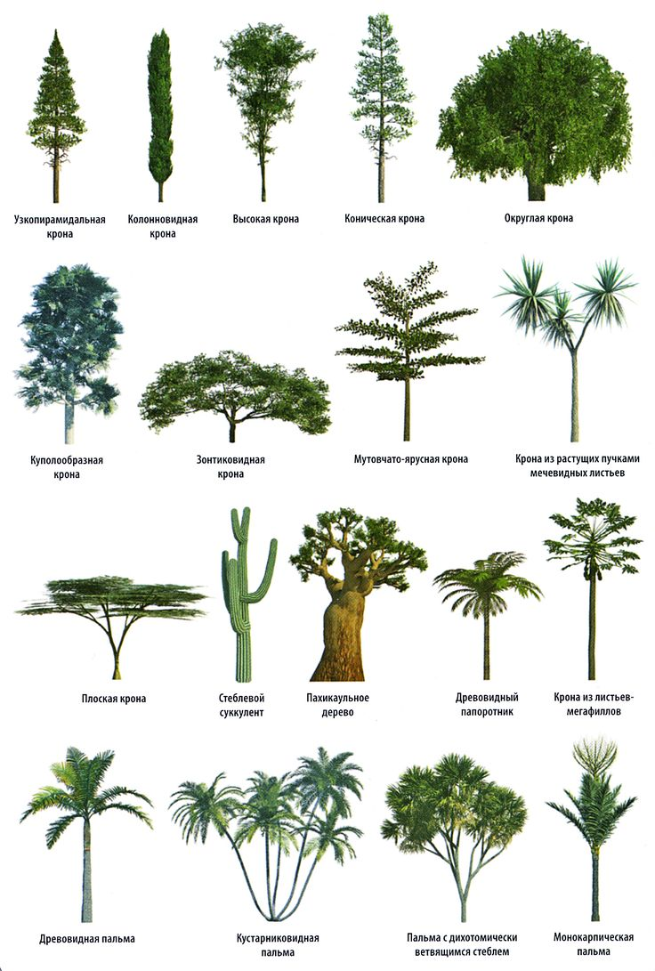 болят разные виды деревьев картинки лучше выглядеть себя