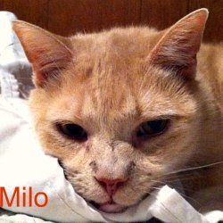 CAT POISONS:  Human Medications