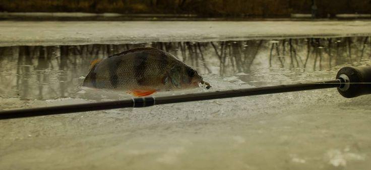 Рыбалка в Запорожье: береговой отчет, ловля окуня от Виталия Сажнева.