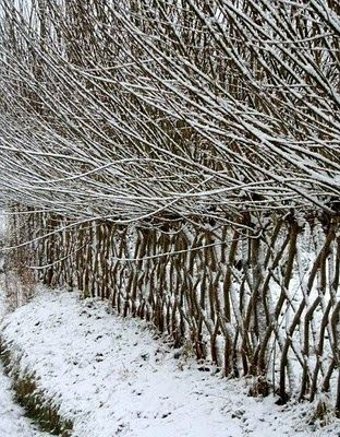 Pleached/Woven Living Fence - use for livestock and can coppice/pollard for fodder, mulch, fire wood or crafts. (this would be grown on mounds adjacent to raised drystone path - keep walking off mounds)