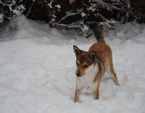 Lundeklippe Brynhild in the snow 2011