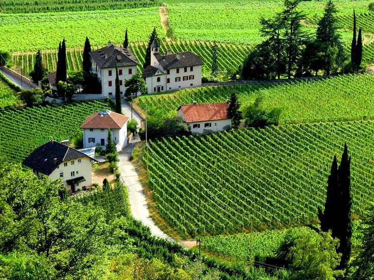 Terlan, Bozen, Südtirol, Italia. Land of Gewürztraminer!