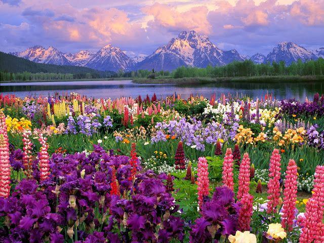 arte y jardinera diseo de jardines flores silvestres familia de las leguminosas
