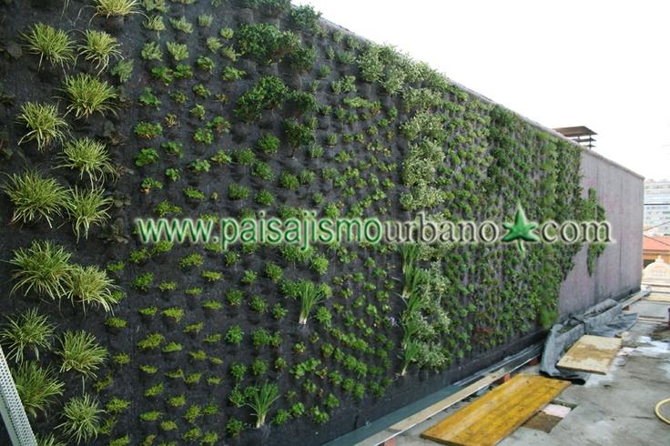 Mejores 10 im genes de jardin vertical tico murcia en for Materiales para jardines verticales