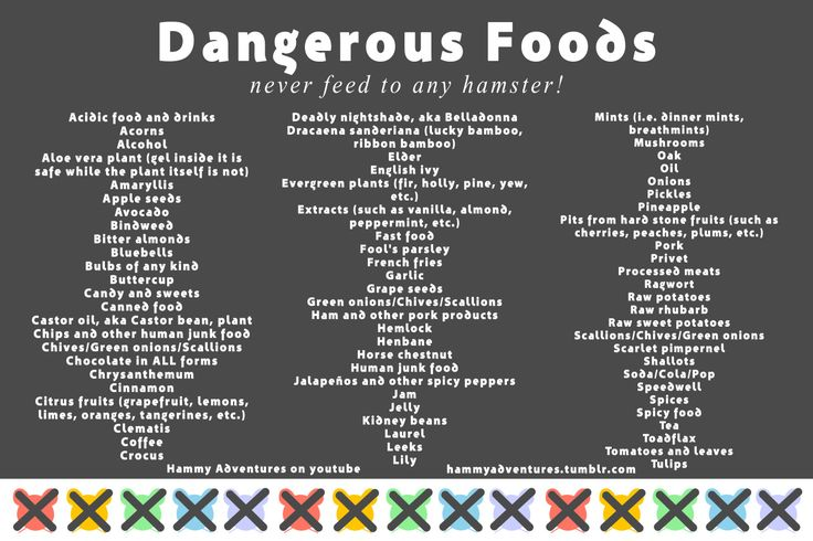 Safe and Dangerous Foods for Hamsters, Part 10 || hammyadventures.tumblr.com || Hammy Adventures on youtube