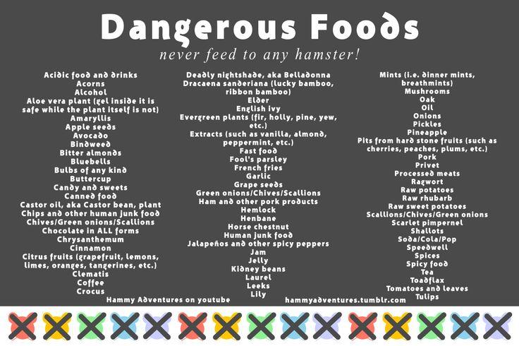 Safe Foods For Hamsters List