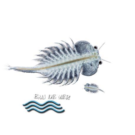 Les 63 meilleures images du tableau aqua algoculture for Nourriture poisson combattant