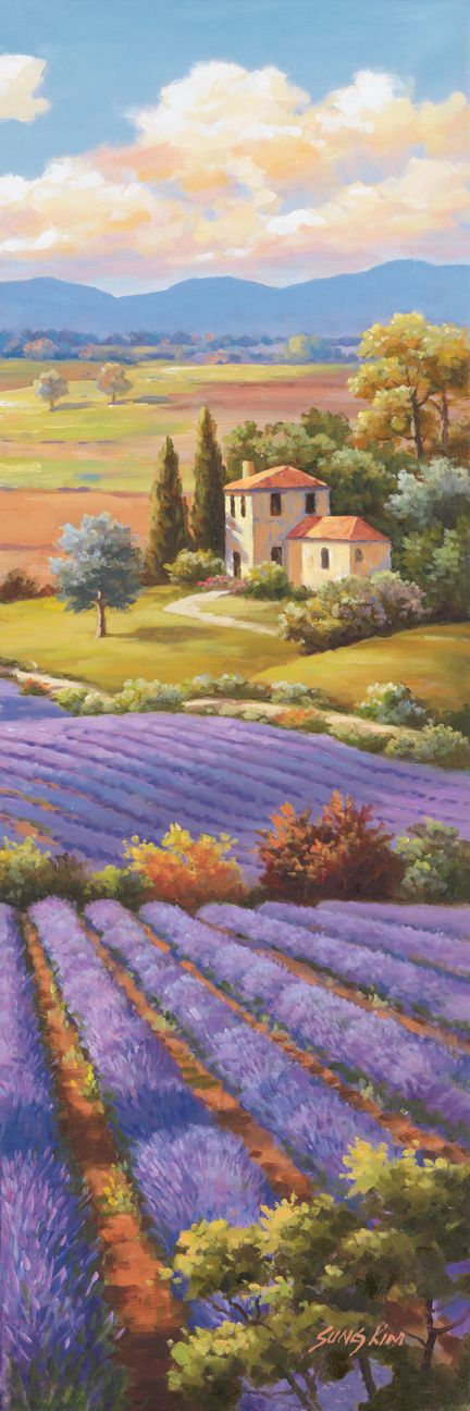 Fields of Lavender by Sung Kim