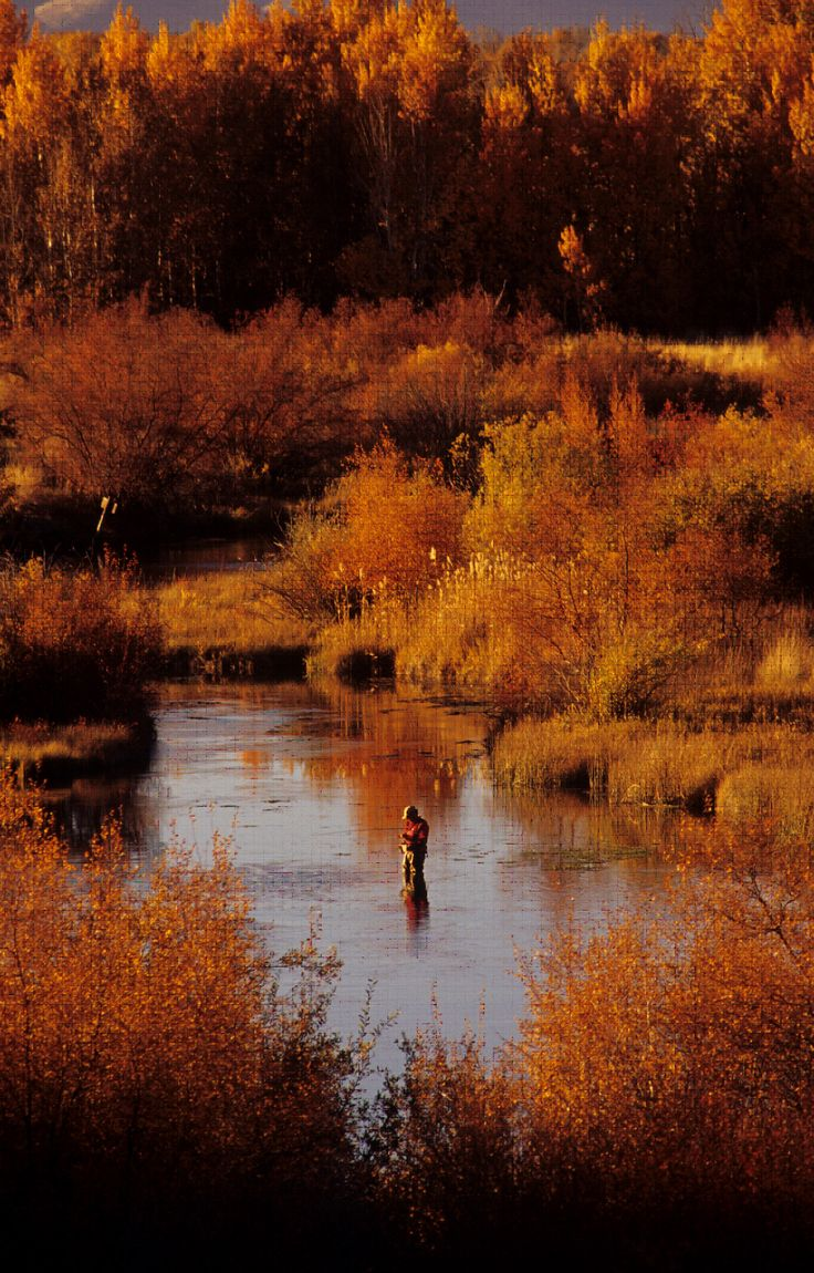 Fly Fishing Fall 2