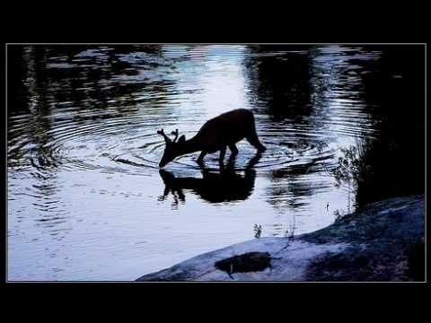 AS THE DEER PANTS FOR THE WATER, via YouTube.