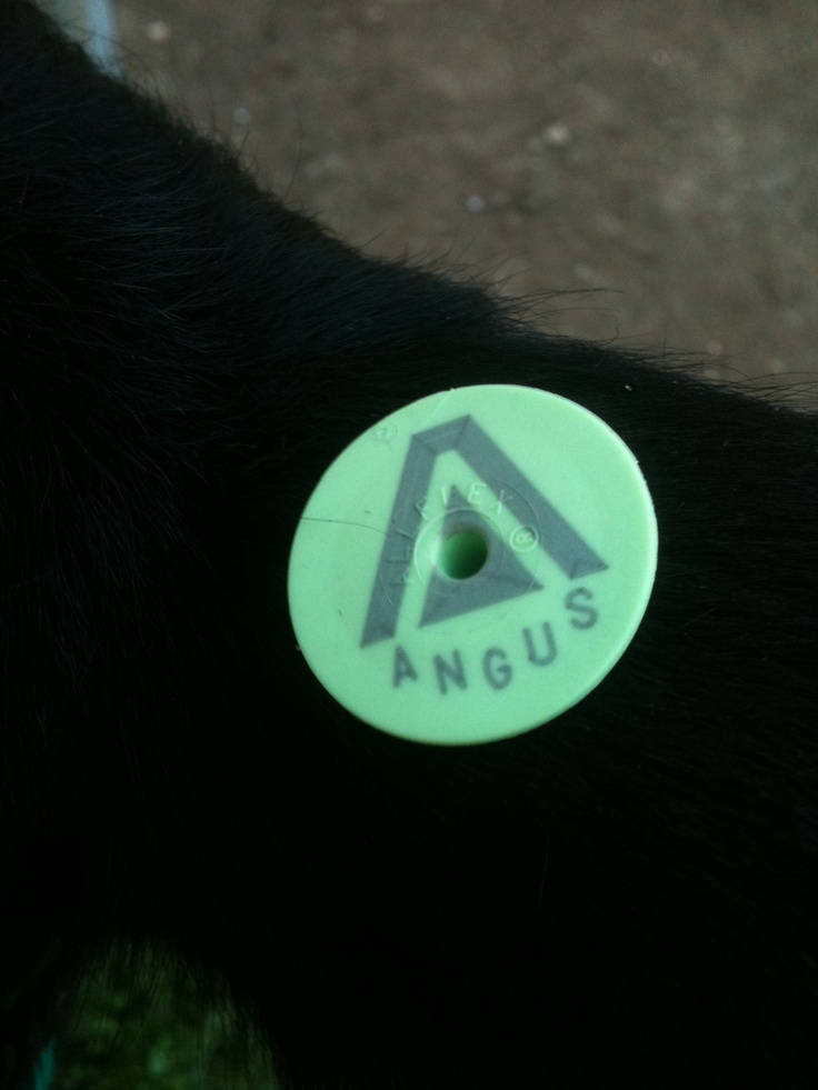 angus genetics supply a superior product