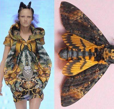 Biomimética aplicada na moda: a arte de imitar a natureza