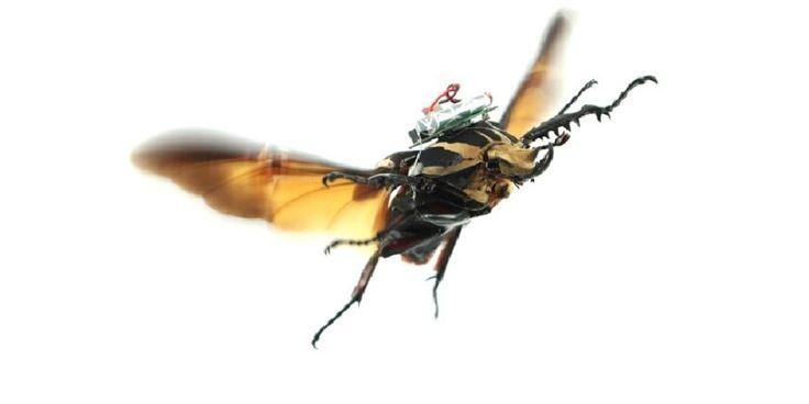 scarabée drone