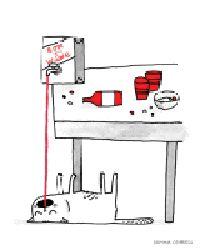gato borracho Heyvino.com