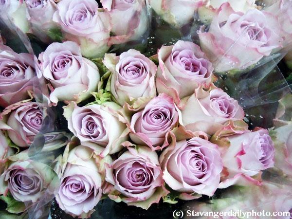 Stavanger Daily Photo: My florist