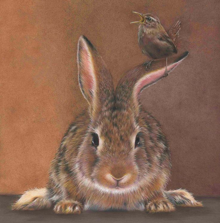 13 best bunnies images on Pinterest  Rabbits Bunnies and Funny