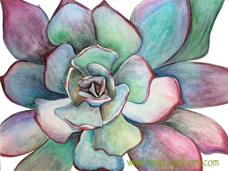 Vibrant succulent drawing completed in Derwent Inktense pencils