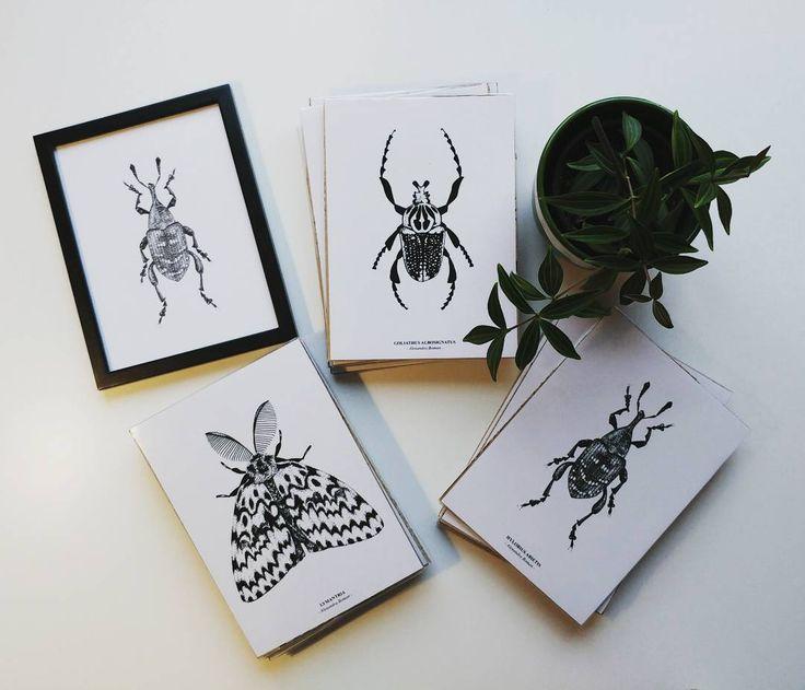 Har kvar några insekter som behöver hem. De säljes för 100 kr styck! Skicka mig ett meddelande. #insekter #illustration #miniposter #goliatbagge #knäppskorv #nunnefjäril #mal #skorv #floraochfauna #skogen #blandblommorochblad  #svartvitt #fineliner