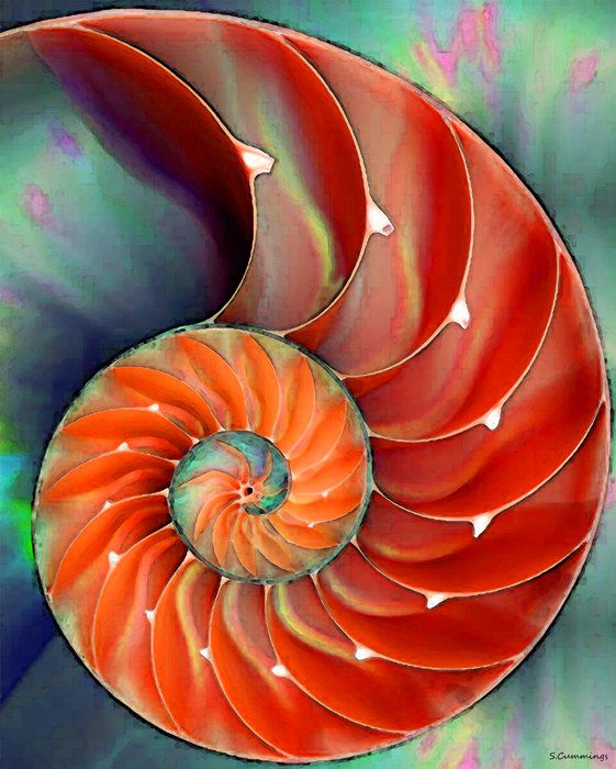 Nautilus Shell Art Print from Painting Colorful Red Beach Ocean Sea Shells CANVAS Ready To Hang Large Artwork FREE Shipping S/H via Etsy