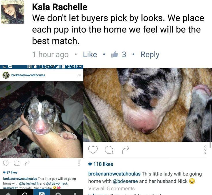 Craigslist Houston Beagle Puppies 2021