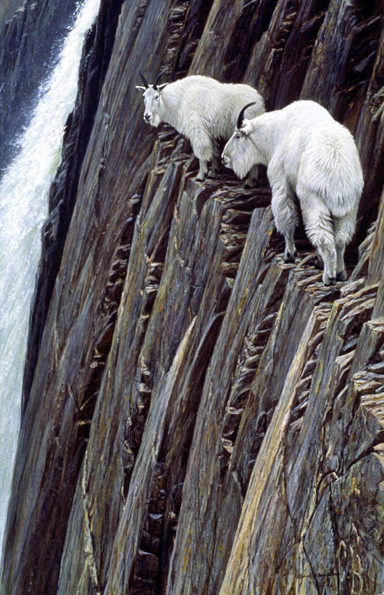 :: Mountain Goats  ••  OMG!