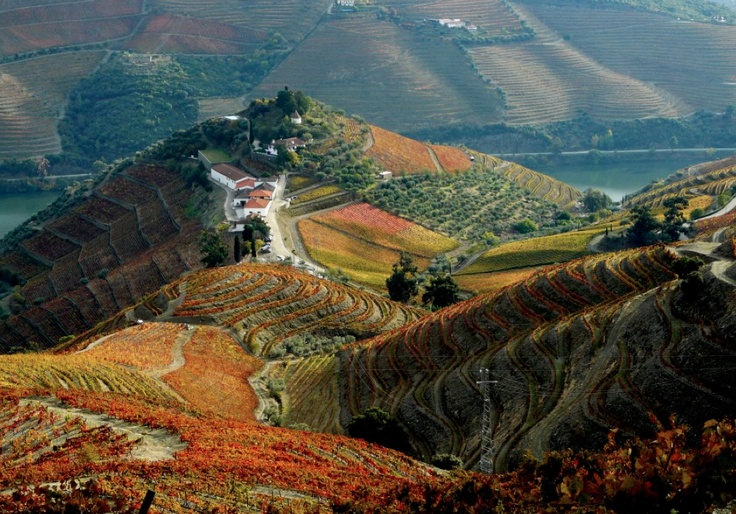 This comes JIT - I am off to Portugal in a couple of months: Quinta do Crasto Winery during fall, Douro, Portugal