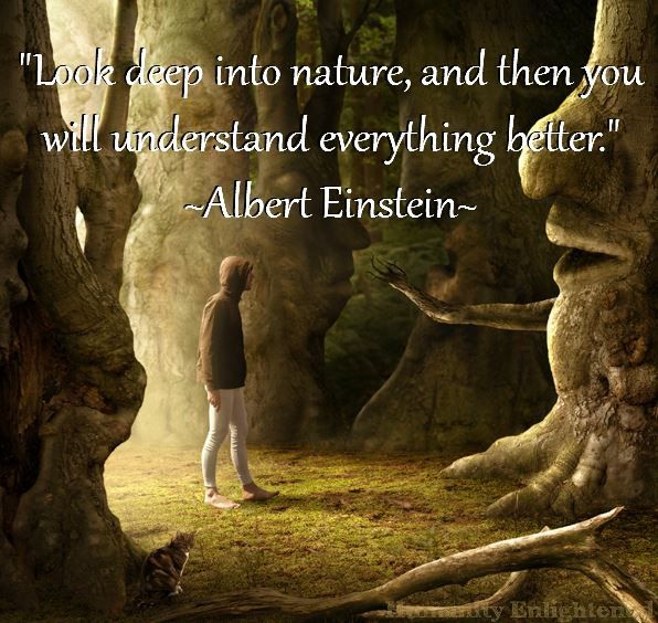 a philosopher of nature albert einstein Albert einstein was both an extraordinary scientist and world personality in a series of papers written between 1905 and 1917, he almost single-handedly dismantled and then reconstructed man's conception of the universe and, thereby, man's perception of himself geneticist jbs haldane once.