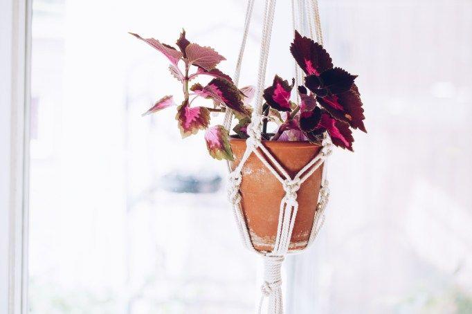 DIY makramé plant hanger - reaktionista.se