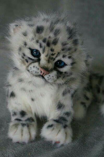Schneeleopard - Kleinkind / Schau' mal bitte nicht so knuffig, sonst hole ich dich zu mir. Dann kann ich mit dir knuddeln!