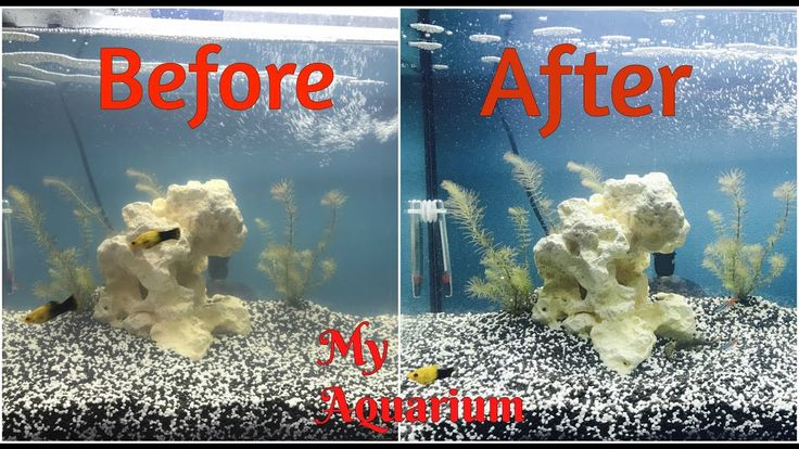 how to get crystal clear aquarium water