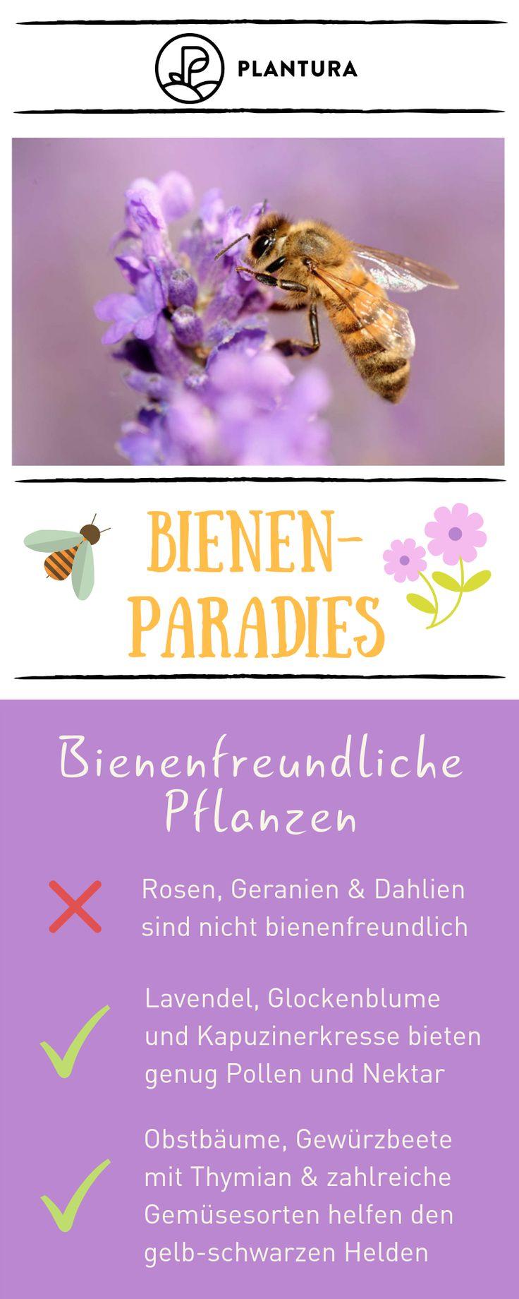 10 Tipps für ein Bienenparadies in Ihrem eigenen Garten: Bienenfreundliche Pflanzen. B …   – Garten-Ideen