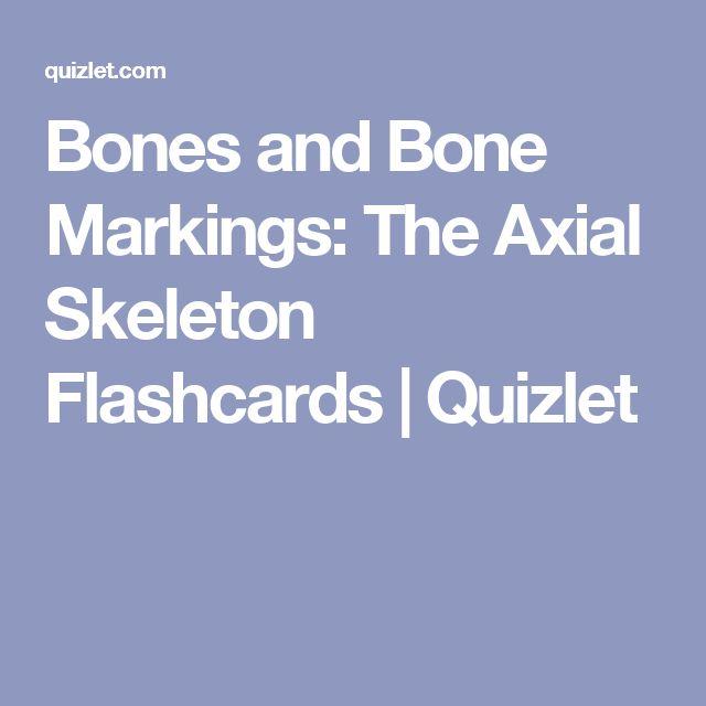 16 best skeletal images on pinterest axial skeleton facial bones bones and bone markings the axial skeleton flashcards quizlet fandeluxe Gallery
