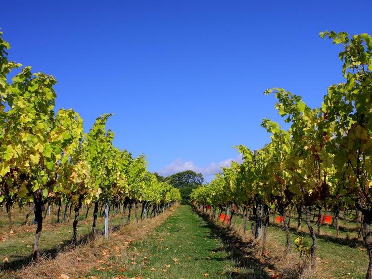 Daventport Vineyards East Sussex