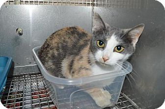 Brookhaven Animal Shelter Cats