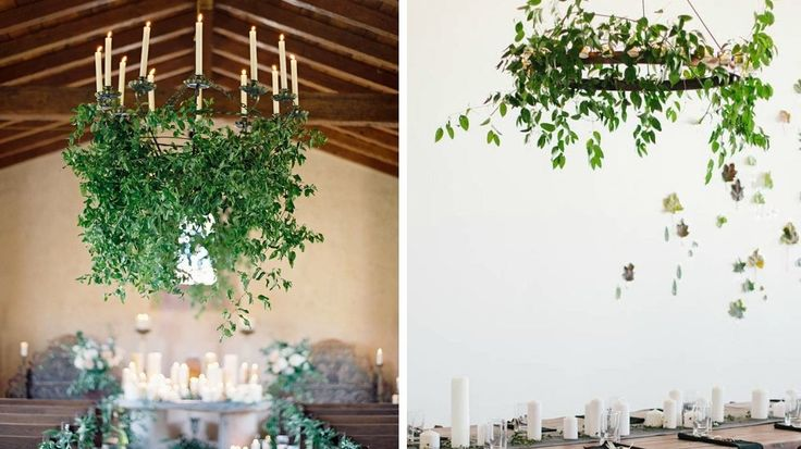 lustre plantes vertes