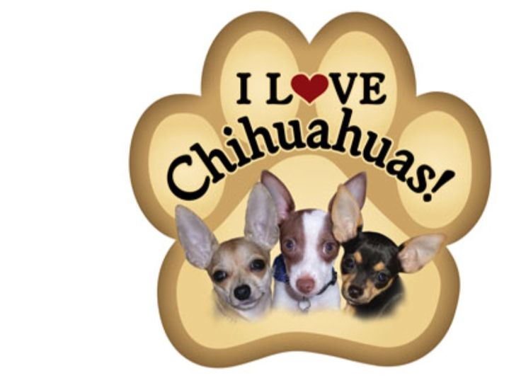 25 Best Gifts For Chihuahua Lovers Images On Pinterest Chihuahua