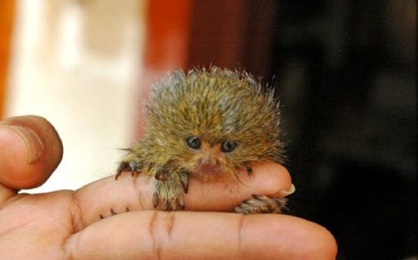 List of 9 Ridiculously Tiny Animals in The World you probably didn't know..