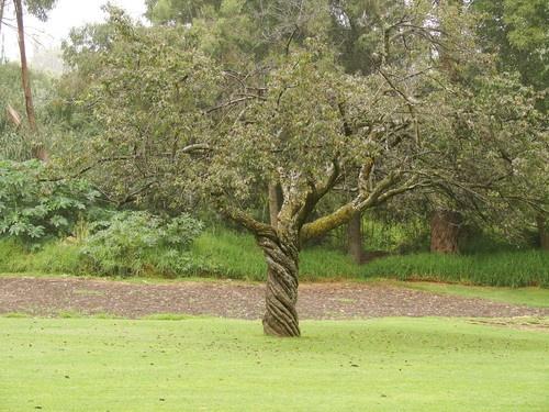 el arbol torcido-  Google Image Result for http://mw2.google.com/mw-panoramio/photos/medium/14911897.jpg